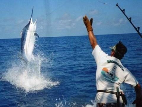 Fortune hotels dubai deep sea fishing for Deep sea fishing trips near me